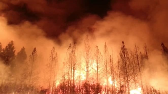 How do bushfires impact property prices: Realestate.com.au's Nerida Conisbee