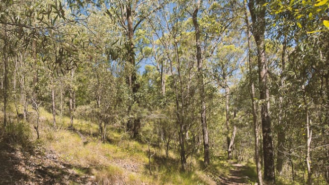How urban bushland improves our health and why planners need to listen: Pierre Horwitz