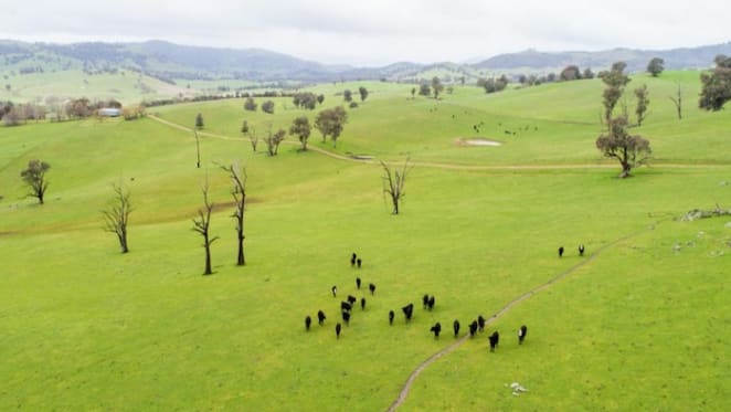 Harold Mitchell sells WA cattle station for $70 million