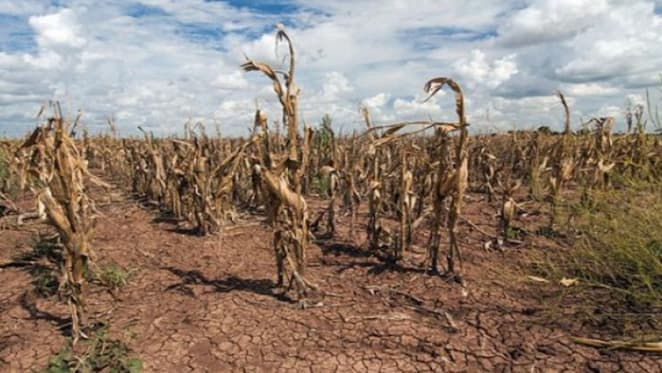 Farmers offered banking assistance during drought