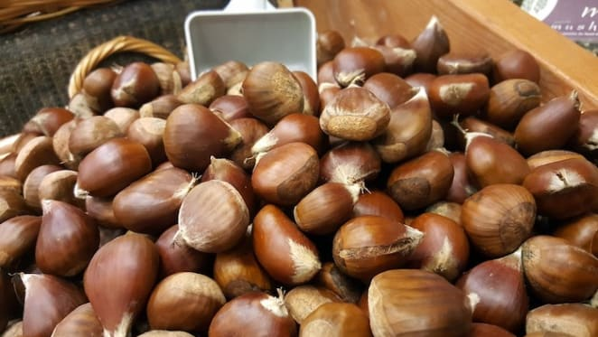Australian hazelnut industry shifting to a larger scale: HTW