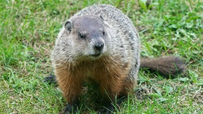 Property Groundhog Day looks set to continue, but there could be tumult ahead: Catherine Cashmore