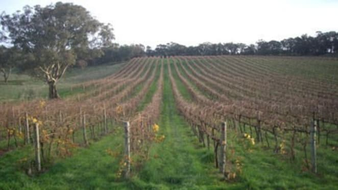 Flat vineyard sales to sparkle next year: Colliers