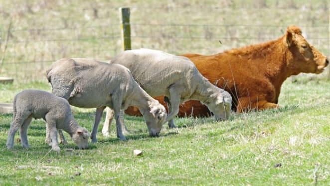 Is negative gearing the sacred cow or sacrificial lamb? Robert Simeon