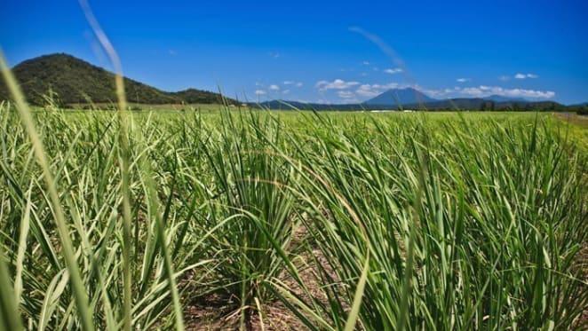 Rain, low interest rates seeding busy northern Queensland rural property market: HTW