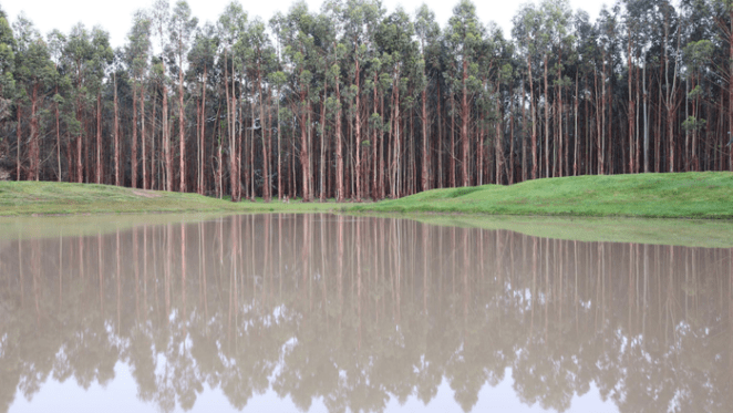 Timber opportunity in prime Victorian forests
