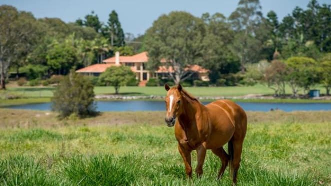 South-east Queensland horse breeding farm for sale