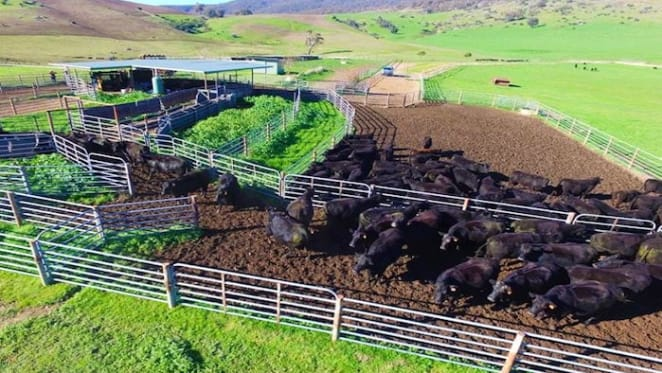 Chinese owned beef farm Mount Falcon Station listed