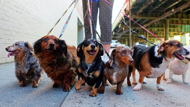 Barking up the right tree: A guide to renting with pets in Australia