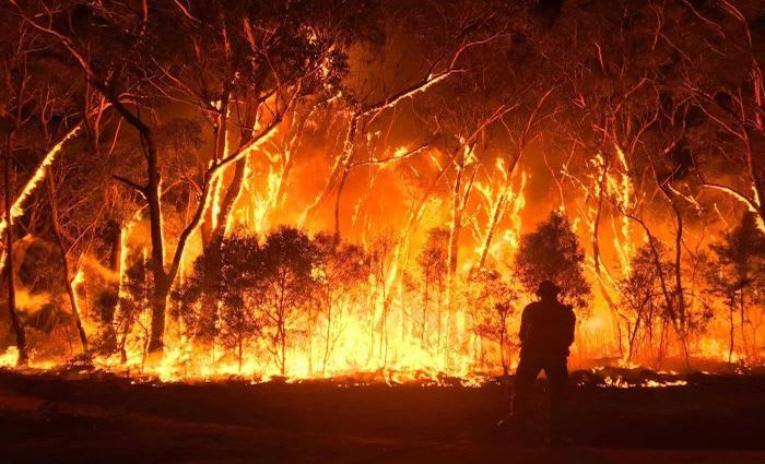 NSW land values dropped by up to 33 per cent after bushfires