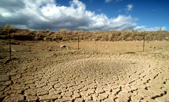 Better data would help crack the drought insurance problem: Neal Hughes