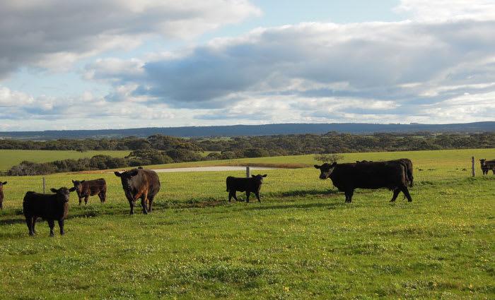 Growth Farms buys on Kangaroo Island from billionaire Kerry Stokes