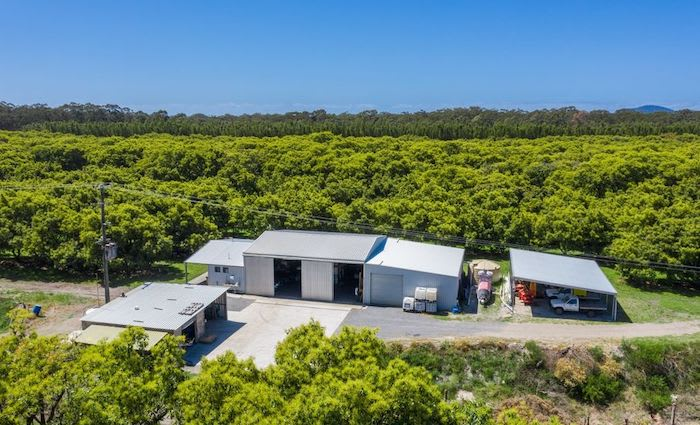 Fishermans Reach avocado orchard listed as smashing investment