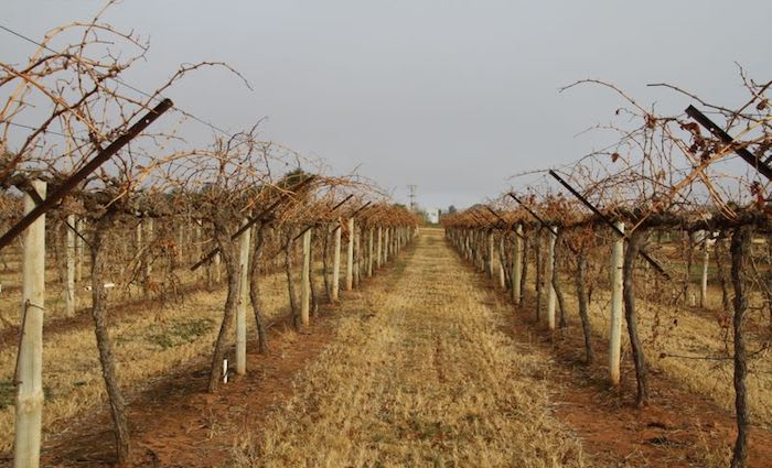 Mildura rural market faced with changing global macroeconomic conditions: HTW rural