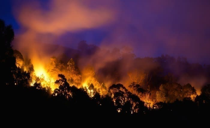 Nearly 80% of Australians have been affected by bushfires in some way