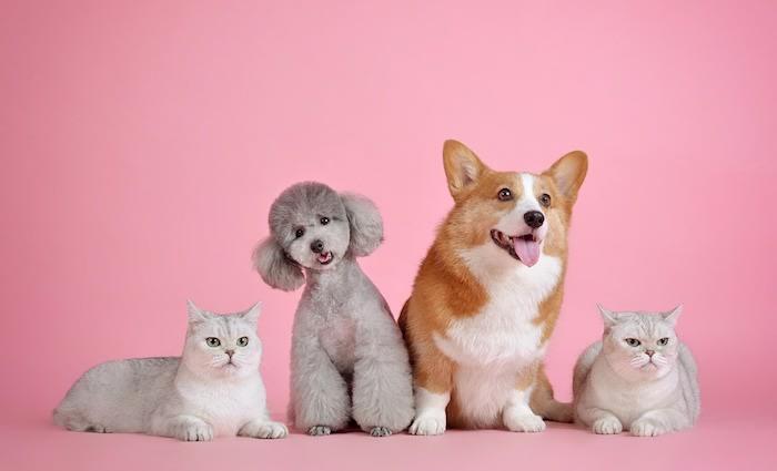 One in 20 NSW rental properties advertised as pet friendly