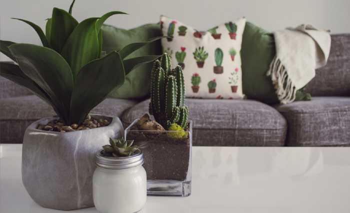 Pot plants rank among Australians' most treasured household possessions
