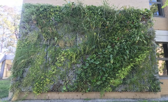 Greenwalls to improve the concentration and wellbeing of university students