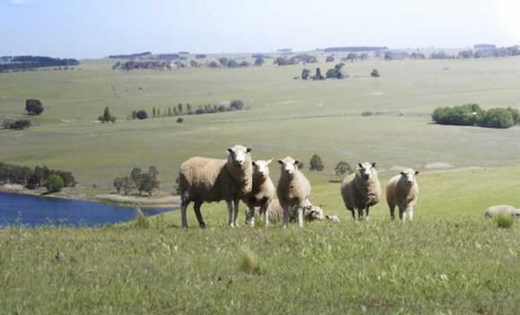 Pejar Park grazing property and homestead listed for online auction