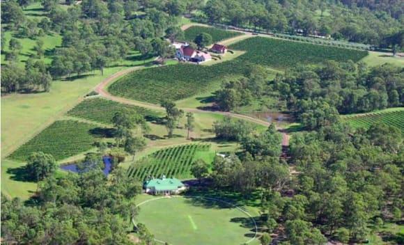 Chinese list Wandin Valley vineyard