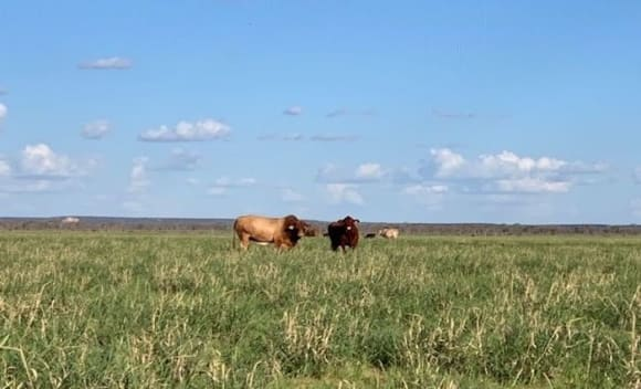 Dry seasonal conditions impacting market confidence in Darling Downs: HTW rural