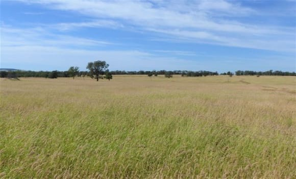 Darling Downs rural market approaching the tipping point: HTW rural