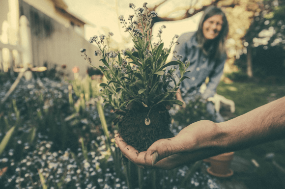 Does Landscaping Increase Property Value?