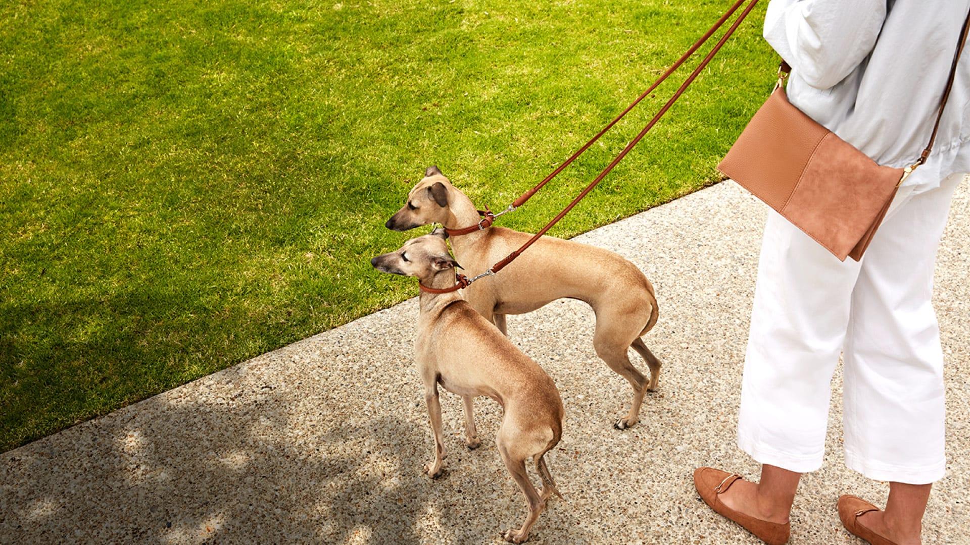 Pet friendly palaces: Four Melbourne apartments perfect for pets