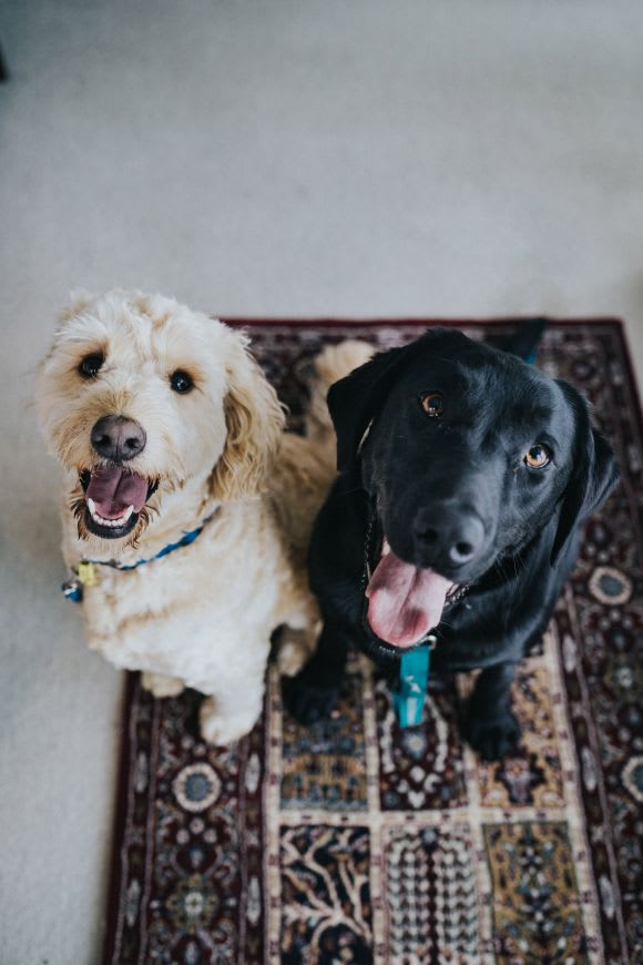 Moving into an apartment with pets? Here's how to keep them safe and happy