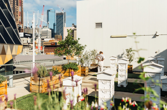 Plan Bee: everything you need to know about urban beekeeping