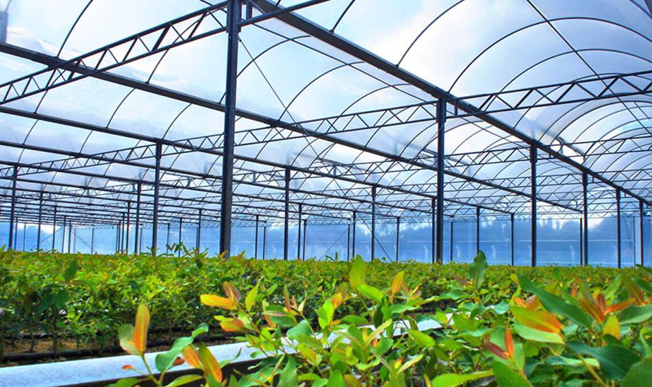 Irrigação para Cultivo Protegido