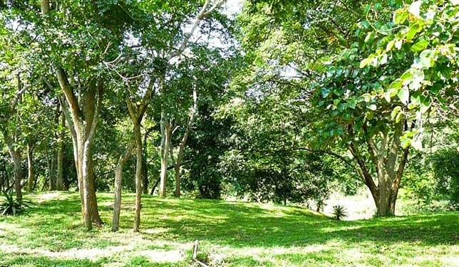 Gardens Sambiya River Lodge