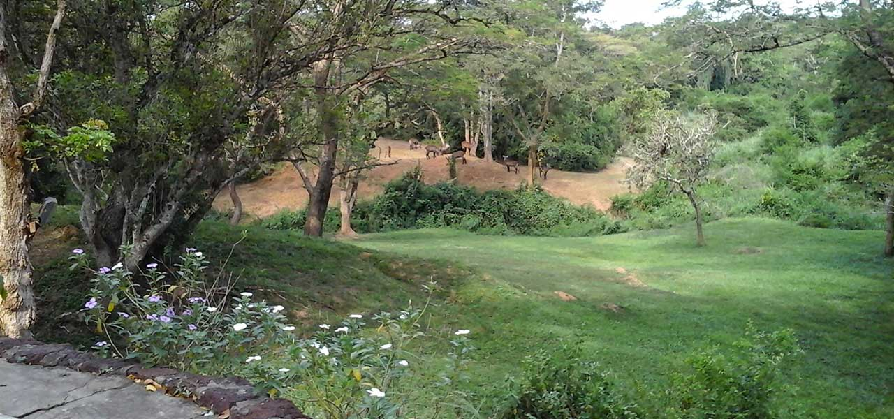 View from cottage - Sambiya River Lodge