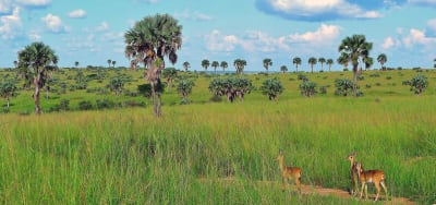 Murchison Falls National Park scenery