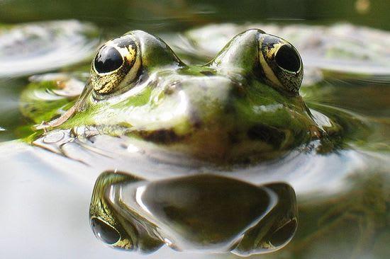 Frog-in-Boiling-Water.jpg