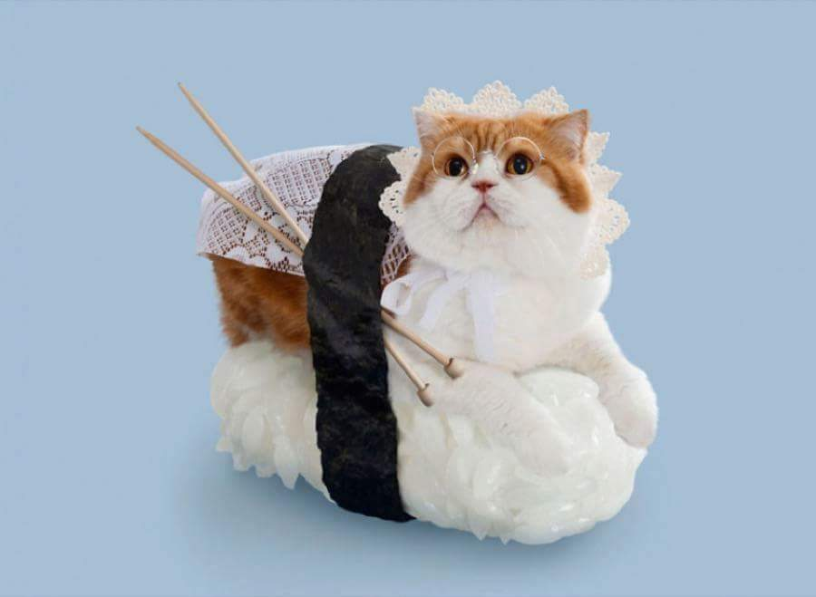 Cats Dressed as Sushi Rolls