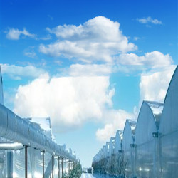 Agriplast Sunsaver Clear Greenhouse Covering Film 1.jpg