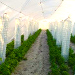Agriplast Drip Lock Cool Greenhouse Covering Film 1.jpg