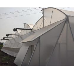 Pooja Natural Ventilated Polyhouse IMAGE