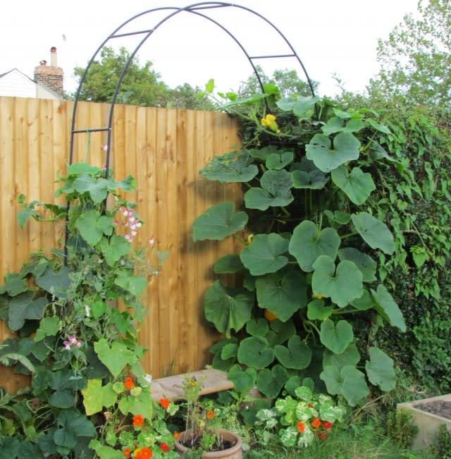 Vertical Gardening Trellises