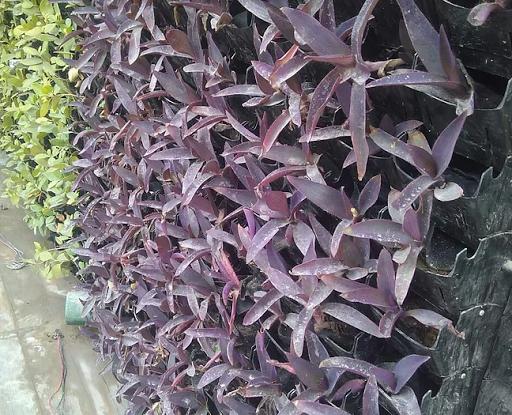 PP Pot Vertical Garden
