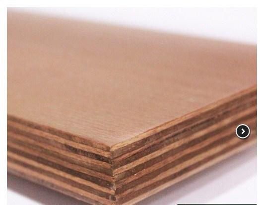 Green Gold Prima Plywood