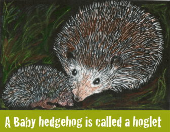 An adult and baby hedgehog together.