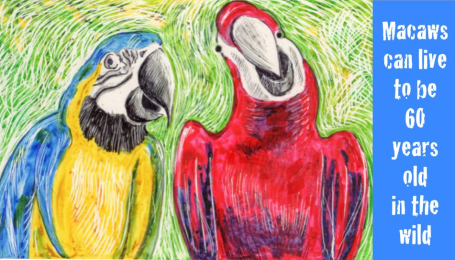 Two macaws, one blue and yellow, the other red