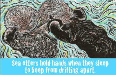 Two otters floating on their backs clasping paws.