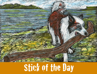 A dog drags a huge stick up from the seashore