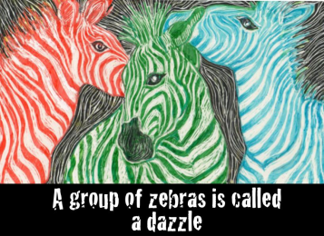 Three zebras with coloured stripes instead of black. Red, green and blue from left to right.
