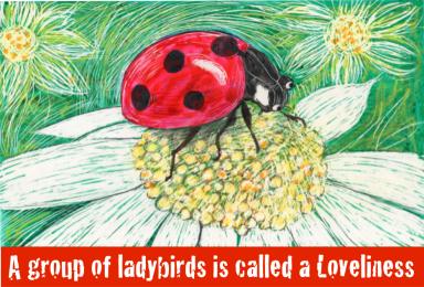 A ladybird on a flower