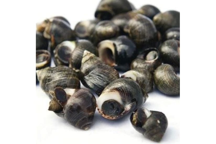 Periwinkles (cooked) 500g