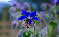 Northumberland Honey